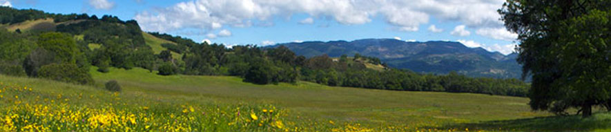 Sonoma and Napa Counties Tourist Guide