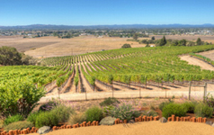 Vineyards for Sale Sonoma & Napa Wine Country
